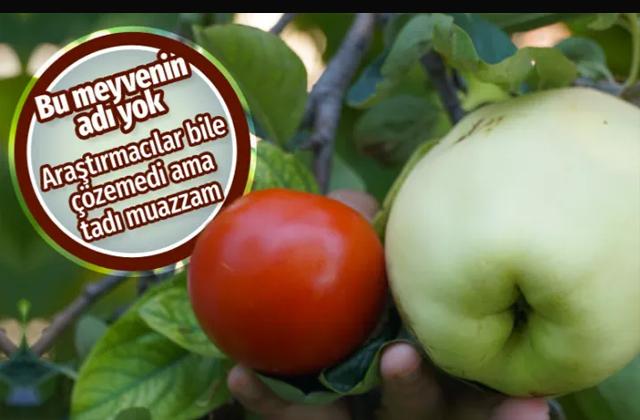 Eskişehir'de gizemli meyvenin adını bilen kimse yok araştırmacılar bile anlayamadı