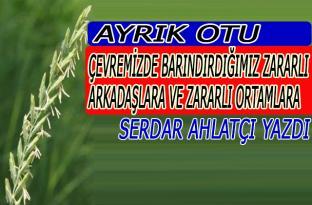 AYRIK OTU